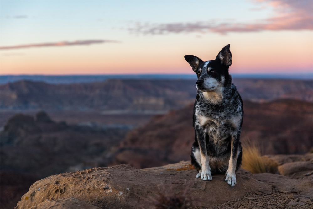 dog and sunset in australia